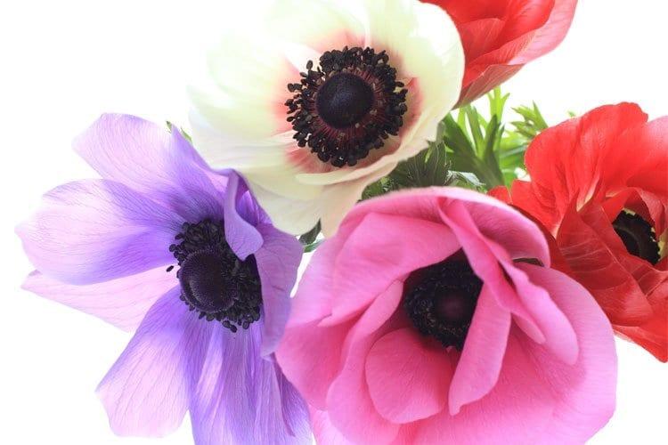 Vilken blomma är du?